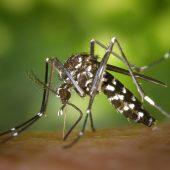 disinfestazione-zanzara-tigre